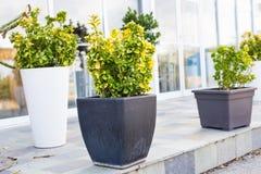 不同的盆的室外植物和的幼木 库存图片