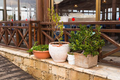 不同的盆的室外植物和的幼木 图库摄影