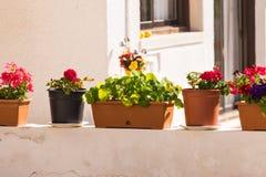 不同的盆的室外植物和的幼木 免版税库存照片