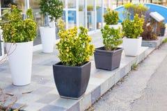 不同的盆的室外植物和的幼木 免版税库存图片
