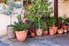 不同的盆的植物和幼木在花店入口附近 图库摄影
