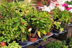 不同的盆的植物和幼木在花店入口附近 免版税库存图片