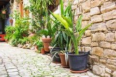 不同的盆的植物和幼木在花店入口附近 库存照片