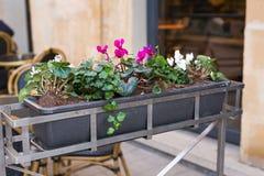 不同的盆的植物和幼木在花店入口附近 免版税图库摄影
