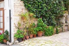 不同的盆的植物和幼木在花店入口附近 免版税库存照片