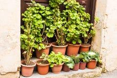 不同的盆的植物和幼木在花店入口附近 库存图片