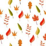 不同的秋叶的无缝的样式 库存照片