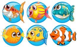 不同的种类在圆的徽章的鱼 向量例证