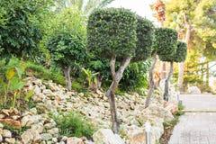 不同的绿色室外灌木和的草本 免版税图库摄影