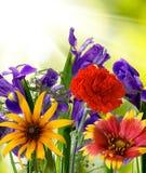 不同的美丽的花在庭院里 库存照片