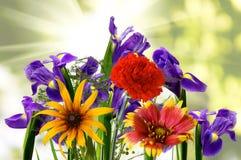 不同的美丽的花的图象在庭院特写镜头的 免版税库存照片
