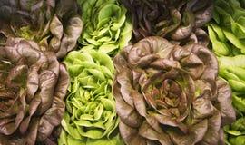 不同的色的莴苣 库存照片