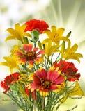 不同的花在庭院里 库存图片