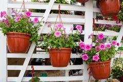 不同的花在花市场上 免版税库存照片