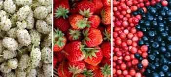 不同的莓果的混合:桑树,草莓,蓝莓,蔓越桔 背景许多饺子的食物非常肉 库存图片
