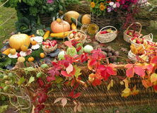 不同的蔬菜 免版税库存照片