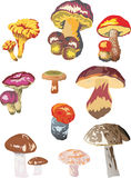 不同的蘑菇 皇族释放例证