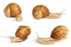 不同的角度几只蜗牛 库存照片
