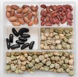 不同的豆类种子 免版税库存照片