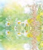 不同的野花花束在水中反射了 库存照片