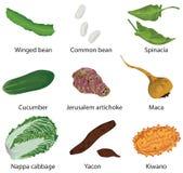 不同的集蔬菜 免版税库存图片