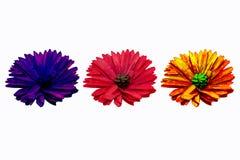 不同的颜色三朵花在白色背景的装饰的 库存照片