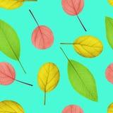 不同的颜色叶子的无缝的样式  库存图片