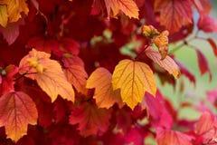 不同的颜色秋叶  图库摄影