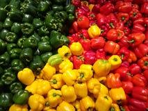 不同的颜色辣椒的果实  图库摄影