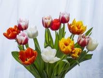 不同的颜色郁金香花束  免版税库存照片