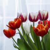 不同的颜色郁金香花束  免版税图库摄影