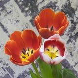 不同的颜色郁金香花束  图库摄影