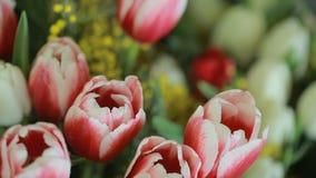 不同的颜色郁金香水多,五颜六色的花束和含羞草,特写镜头 股票视频