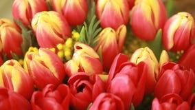 不同的颜色郁金香水多,五颜六色的花束和含羞草,特写镜头 股票录像