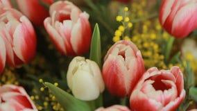 不同的颜色郁金香水多,五颜六色的花束和含羞草,特写镜头 影视素材