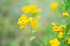 不同的颜色野花花束在户外花瓶的 免版税图库摄影
