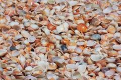 不同的颜色,软体动物壳贝壳  图库摄影