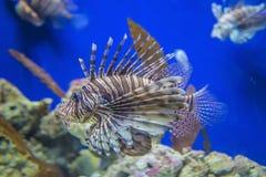 不同的鱼和海生物在水族馆 库存图片