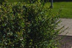 不同的绿色灌木 免版税库存照片
