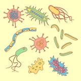 不同的细菌类型 库存照片