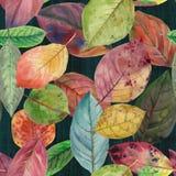 不同颜色秋叶无缝的纹理  皇族释放例证