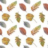 不同颜色设计的典雅的秋叶 五颜六色的叶子的无缝的水彩样式 皇族释放例证