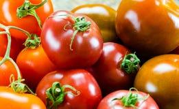 不同鲜美五颜六色的有机蕃茄  库存照片