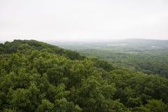 不尽的森林 免版税图库摄影