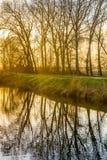 不生叶的分支在镜子光滑的水表面反射了 免版税图库摄影