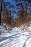 不生叶的树之间的斯诺伊道路 免版税库存图片