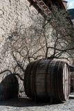 不生叶的树和大木桶在防御墙壁在汉堡 免版税库存图片