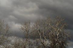 不生叶的树和灰色云彩 免版税库存照片
