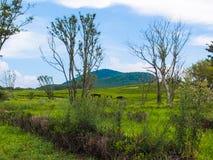 不生叶的树在草原 免版税库存图片