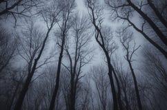 不生叶的树在黑暗被困扰的森林 免版税库存照片